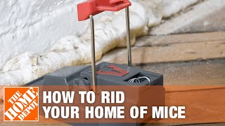 How To Rid Your Home Of Mice - The Home Depot