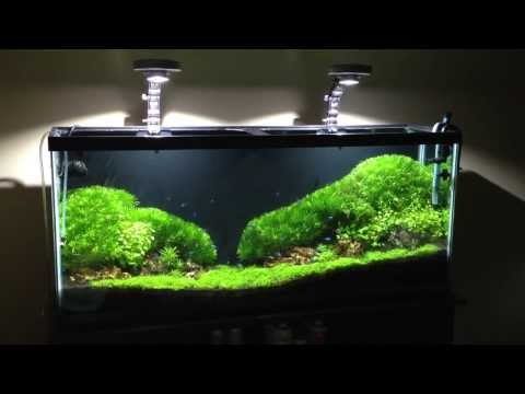 Moss Carpet Idea
