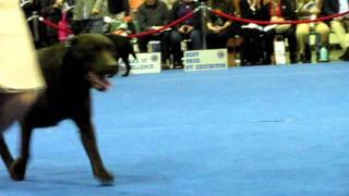2011 Akc Eukanuba National Championship Dog Show - Gch Ch Char-don Ms T's Rockin' Tyme