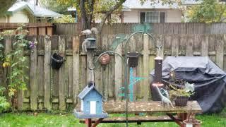 Squirrels, squirrels and more squirrels
