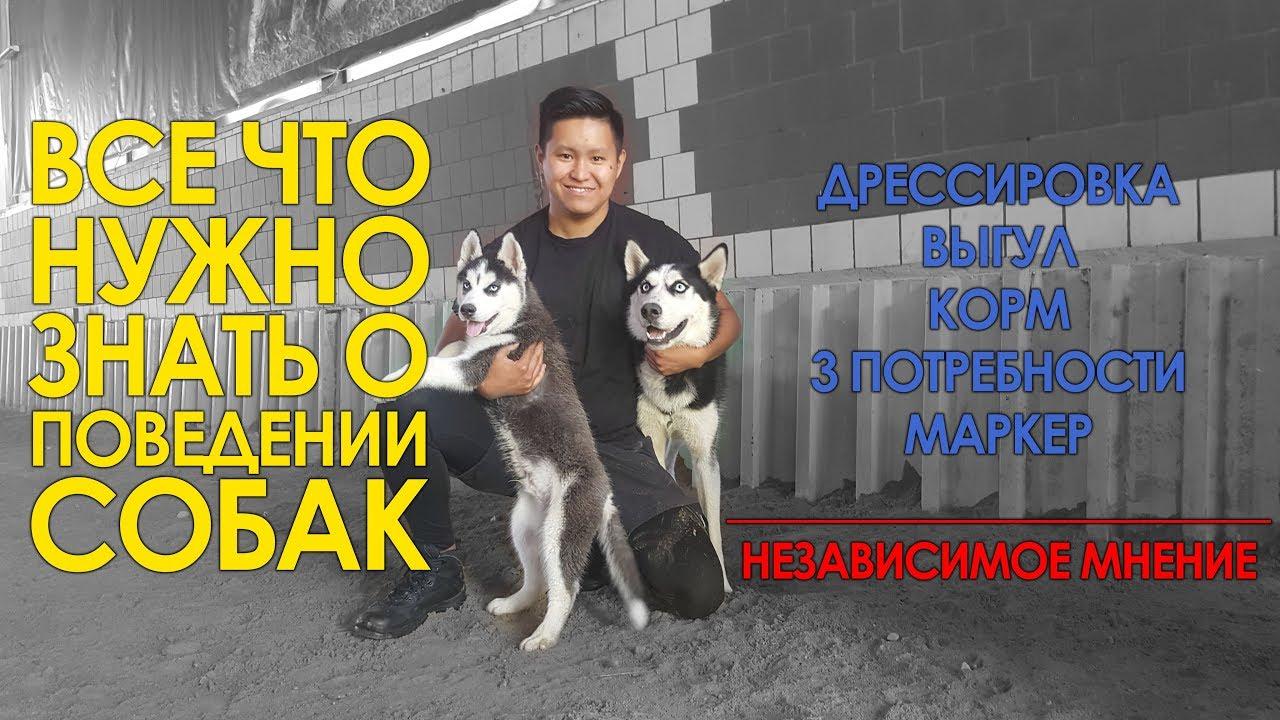 Все собаки питомника с документами ркф. Поможем с доставкой в другие регионы. Цена от 15. Тула, 13. 03. 18. Домашние животные. Щенки, собаки.