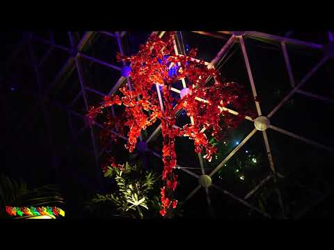 🌴EPIC LIGHT SHOW! 🌴  Garden of Glass at Missouri Botanical Gardens  Tropical Plant Party
