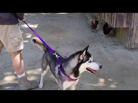 Dioji at Avila Petting Zoo