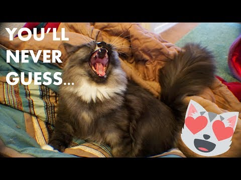 Funny Cats Play With RIDICULOUSLY Simple NEW TOY!!!