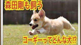 ペットで犬を飼おうと迷っている方へ〜コーギー〜 世の中には様々な犬種...