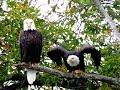 Where Eagles Fly mp3