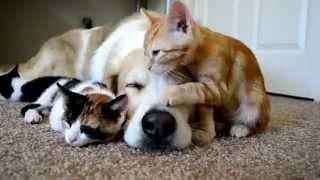 Собака и котята)))