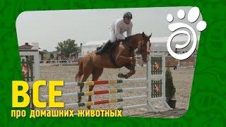 Конкур - Лошадиный Спорт (Часть Третья).Все О Домашних Животных