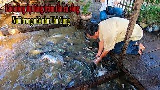 Ông Lão Miền Tây dụ đàn cá Tra hàng chục tấn ngoài sông vào nhà nuôi như thú cưng ở Châu Đốc