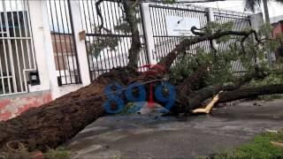 Video: Te mostramos lo que dejó la lluvia en imágenes