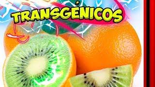 TRANSGÉNICOS - Explicación de estos alimentos 📡👤