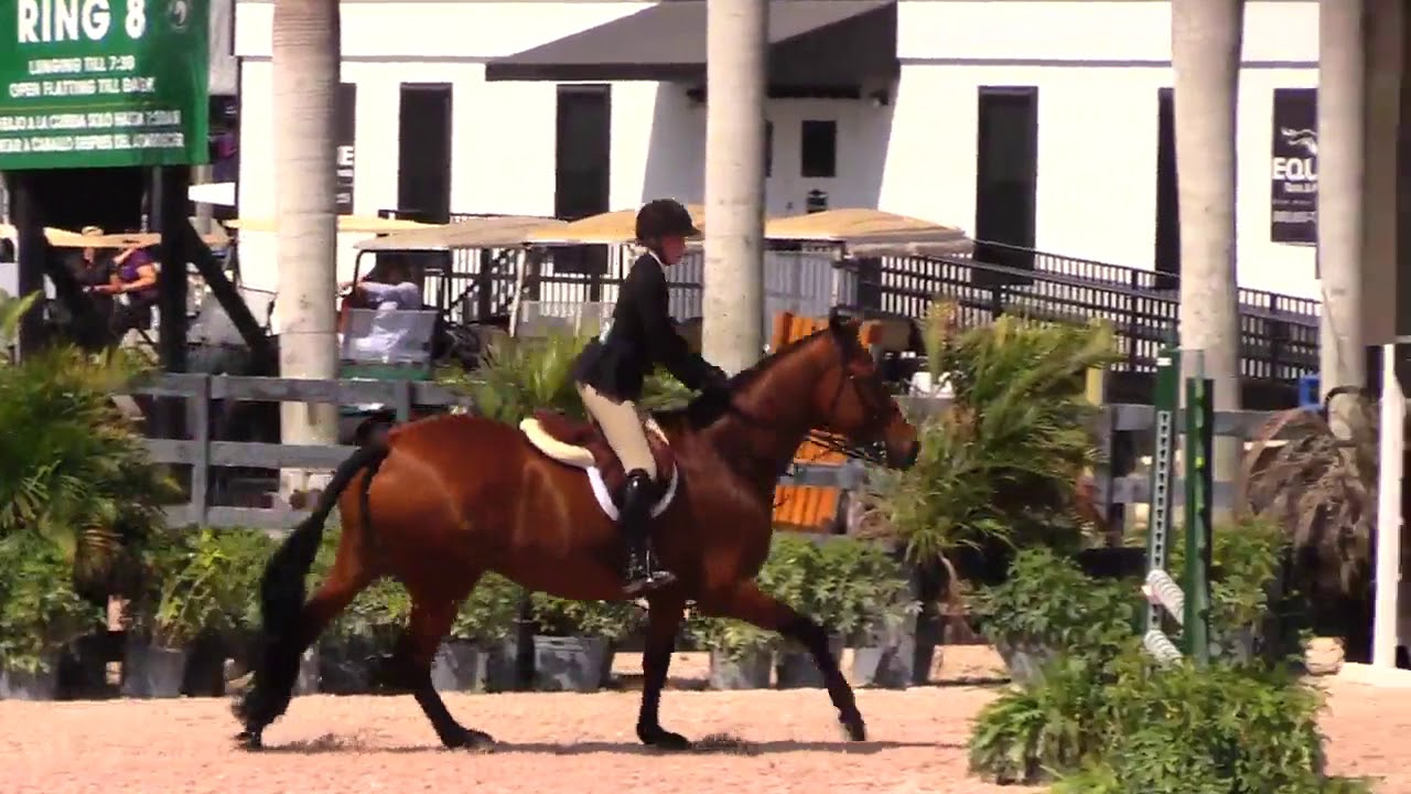 All Inclusive, 15 17 Equitation at WEF