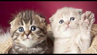 Смешные коты | Приколы с котами | Кошки |Собаки| Позитив  |Создай себе хорошее настроение