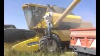tarladan ekin nasıl toplanır döver biçer ile ayrıştırma işlemi yapılması