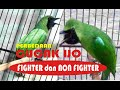 Perbedaan Cucak Ijo Fighter Dan Non Fighter  Mp3 - Mp4 Download
