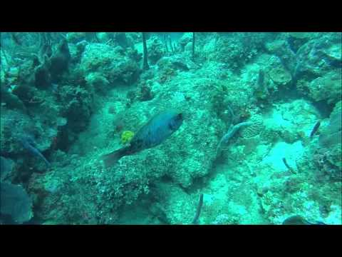 Scuba Diving with Ultra Marine Divers in Bayahibe, Dominican Republic