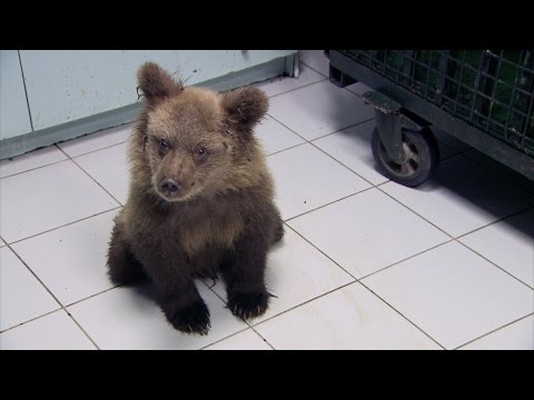 Simon meets a paralysed bear cub - Greece with Simon Reeve: