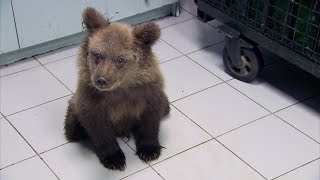 Simon meets a paralysed bear cub - Greece with Simon Reeve: Episode 2 Preview - BBC Two