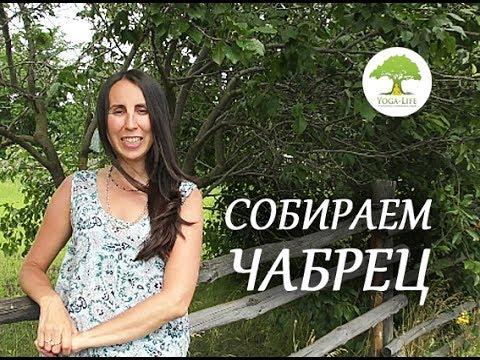ТРАВА ЧАБРЕЦА - HERBA SERPYLLI -