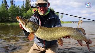 Pike on the fly fishing Big Mama Pesca a mosca al luccio Lapponia Wild lake lodge Lapland Sweden