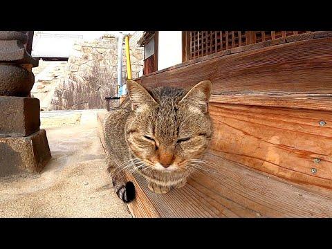 お寺に来た時に膝の上に乗ってきた猫が帰る時にまた甘えてきた