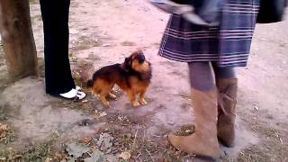 Смешная собака - стояка