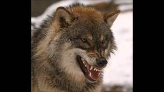 Big Wolf Ft Big Night KshiLL Diss.mp3