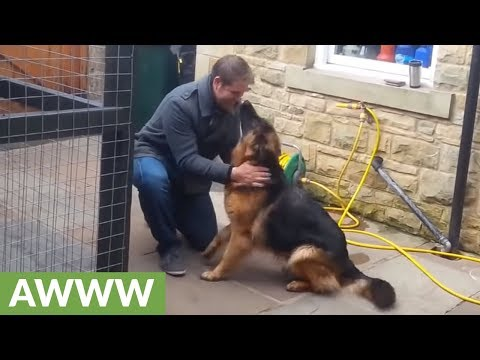 Dog cries with happiness after reuniting with owner