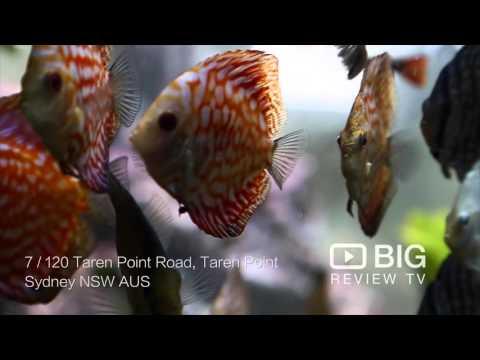 Majestic Aquariums Store In Taren Point NSW Selling Aquarium Supplies And Pet Fish