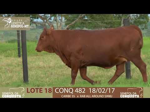 LOTE 18 CONQ 482