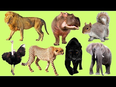 Animals for Kids | Learn  African animals | Learn Names and Sounds of animals | Animals in English