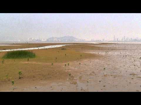 Tide Rising on the Mudflats,Deep Bay