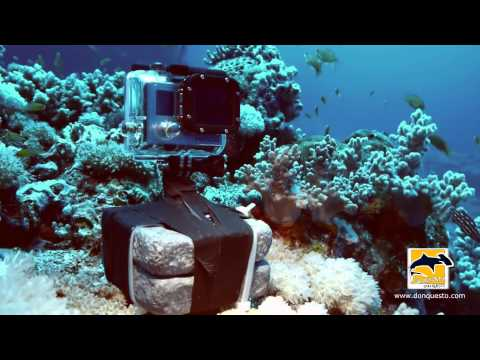 Counting Fish - Underwater Research in Sudanese Red Sea