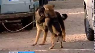 """Волонтёры организации """"Право на жизнь"""" приглашают калининградцев на прогулку с собаками из приюта"""