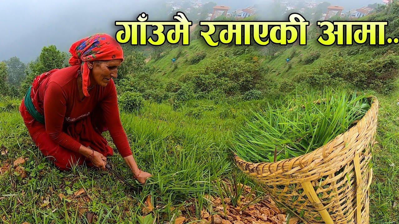 गाउघरमै रमाएकी आमाको कथा    Rural village life in Nepal    Rabilal Poudel