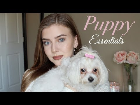 Maltese Puppy | Owning a Maltese Dog | Puppy Essentials