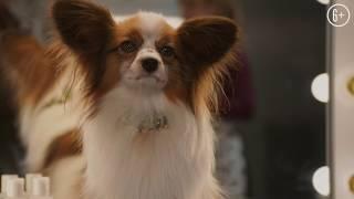 Псы под прикрытием (SHOW DOGS) 2018. Русский трейлер 04. HD. 6+