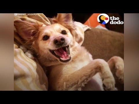 Meet The Happiest Dog On Earth | The Dodo