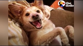 The Happiest Dog On Earth | The Dodo