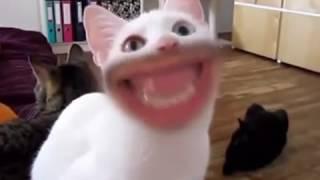 Прикол! Человеческий рот у кошек)))