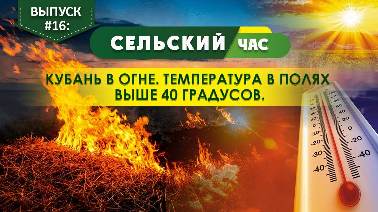 Кубань в огне. Температура в полях выше 40 градусов