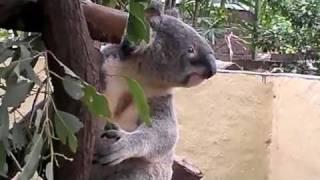 オーストラリア(カンガルー・コアラ)