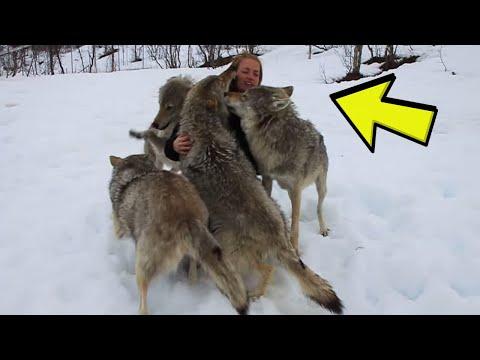 Čopor vukova je okružio ženu, a zatim se dogodilo nešto nezamislivo !
