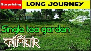 Singel tea graden   Darjeeling   Offbeat destination I Weekend Destination I Long journey I