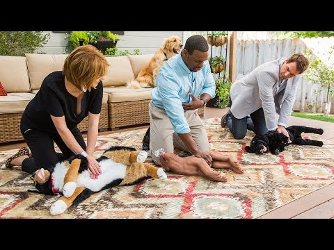 Home & Family - How to Properly Perform Dog CPR