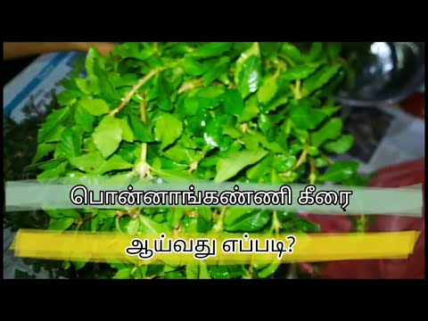 HOW TO CLEAN PONNANGANNI KEERAI | MY INDIAN HOME AND KITCHEN