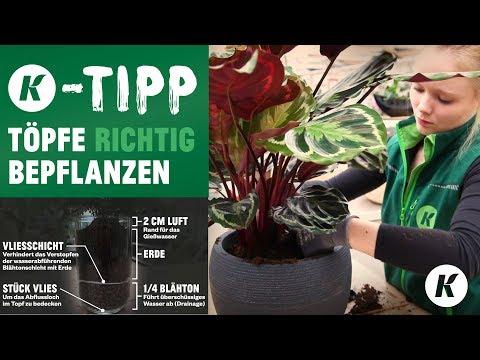 Berühmt Kübel und Töpfe richtig und langfristig bepflanzen // Die #TB_65