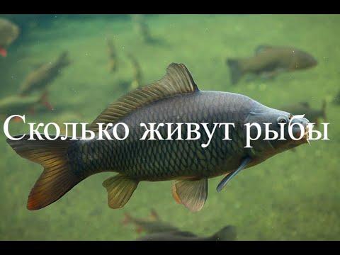 Вопрос: Какая из пресноводных рыб самая распространённая в российских водоёмах?