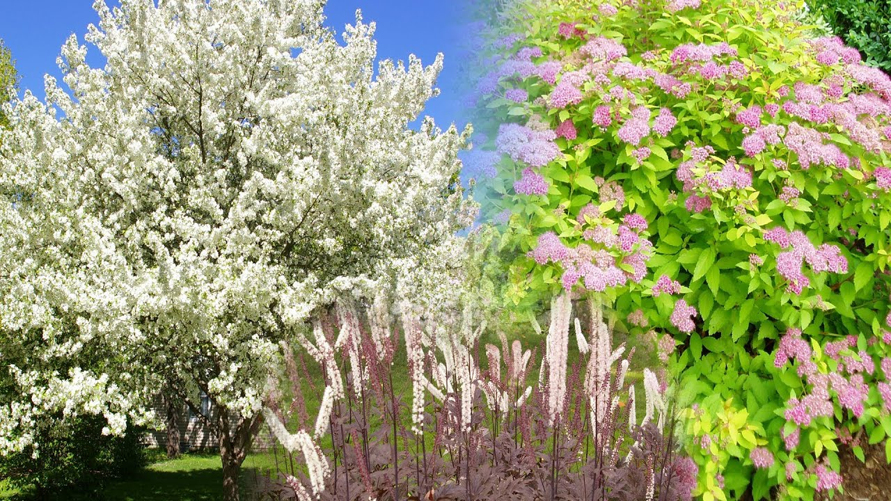 great landscaping trees shrubs