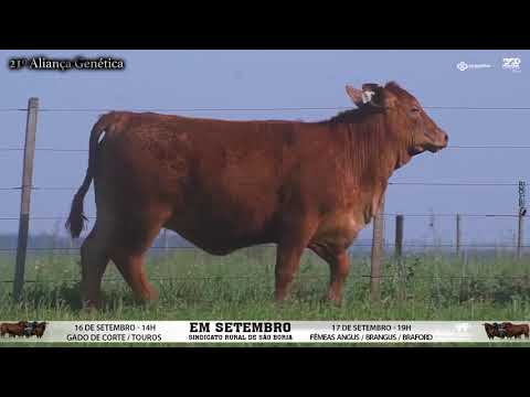 LOTE 095